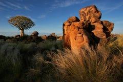 drzewo kołczanu krajobrazu Namibia Fotografia Stock