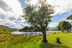 Drzewo, kobieta, psa Derwent wody Jeziorny brzeg, Cumbria, UK Fotografia Royalty Free