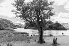 Drzewo, kobieta, psa Derwent wody Jeziorny brzeg, Cumbria, UK monochr Zdjęcia Stock