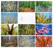 Drzewo kolaż Zdjęcie Stock