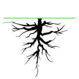 Drzewo korzeń ilustracji