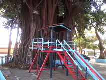 Drzewo korzenia parka szczęśliwy dziecko Fotografia Stock
