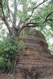 Drzewo korzenie I Drzewne barkentyny Z Dużą Starą stupą zdjęcia royalty free