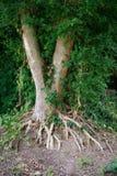 Drzewo korzenie i zieleń liście na ziemi Natura, ?rodowisko ekologii projekt obrazy stock
