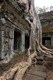 Drzewo korzenie nad okno przy Ta Prohm zdjęcia stock