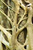 Drzewo korzenie w lesie Zdjęcia Royalty Free