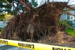 Drzewo korzenie w ostrości Zdjęcia Stock