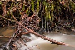 Drzewo korzenie w wodnych strumieniach fotografia stock