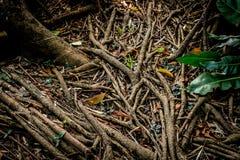 Drzewo korzeniowa sieć Obraz Stock