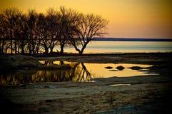 drzewo krajobrazowa woda Obrazy Royalty Free
