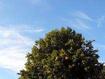 Drzewo który patrzeje jak góra zdjęcie stock