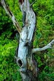 Drzewo Który Przynosi Colour Out Zdjęcia Royalty Free