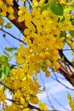 Drzewo kwiaty Obrazy Stock