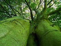 drzewo, las, natura, zieleń, park, drzewa, krajobraz, wiosna, ścieżka, lato, trawa, drewno, liście, ulistnienie, roślina, outdoor obraz royalty free