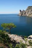 drzewo lazurowy czarny następny sosnowy morze Zdjęcie Stock