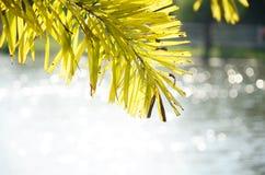 drzewo liście i biali bokeh światła obrazy royalty free