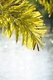 drzewo liście i biali bokeh światła zdjęcia stock