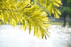 drzewo liście i biali bokeh światła obraz stock