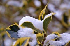 Drzewo liście zakrywający w śniegu obrazy royalty free