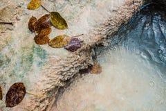 Drzewo liście w wodzie Obrazy Royalty Free