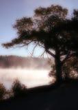 drzewo mgły Fotografia Royalty Free