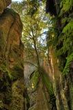 Drzewo między skałami Zdjęcia Royalty Free