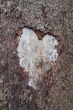 Drzewo miłość 3767 obrazy royalty free