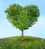 Drzewo miłość Obrazy Stock