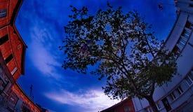 Drzewo między budynkami obrazy royalty free
