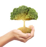Drzewo monety w ręce Zdjęcie Stock