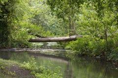 Drzewo most Obrazy Stock