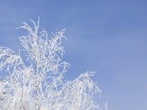 drzewo, mrożone Obrazy Royalty Free