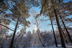 drzewo, mrożone fotografia royalty free