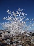 drzewo, mrożone Obraz Royalty Free