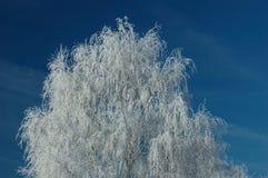 drzewo, mrożone Zdjęcia Royalty Free