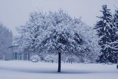 drzewo, mrożone Obraz Stock