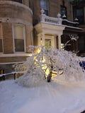 drzewo, mrożone Fotografia Stock