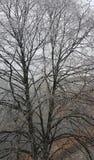 drzewo, mrożone Zdjęcie Stock