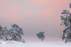drzewo, mrożone Zdjęcia Stock