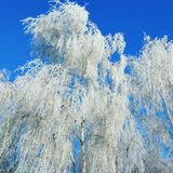 drzewo, mrożone Obrazy Stock