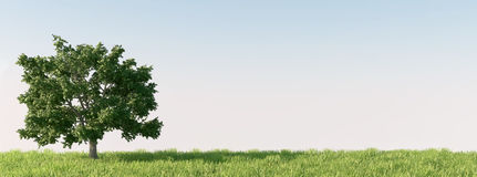 Drzewo na łące Obraz Royalty Free