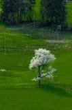 Drzewo na łące Obrazy Stock