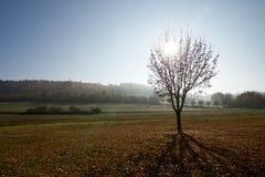 Drzewo na łące w contre-jour z mgiełką zdjęcia stock