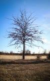 Drzewo na łąkowym polu Zdjęcia Stock