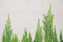 Drzewo na ścianie Obrazy Royalty Free