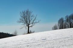 Drzewo na śnieżnej łące obraz royalty free