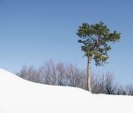 Drzewo na śnieżnym wzgórzu Obraz Stock