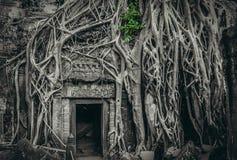 Drzewo na świątynnym wejściu Zdjęcie Stock