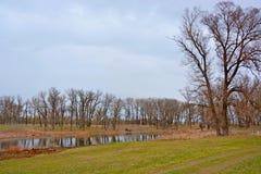 Drzewo na banku jezioro Obrazy Royalty Free