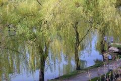 Drzewo na banku rzeka Fotografia Stock